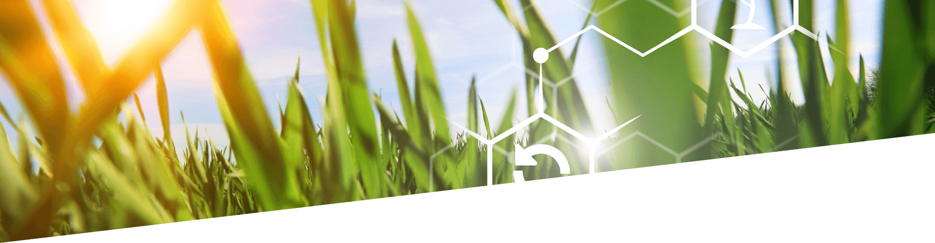 Sectors Agribusiness Banner_1920500 (1)